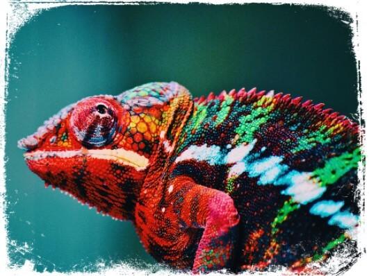 O que significa sonhar com camaleão vermelho