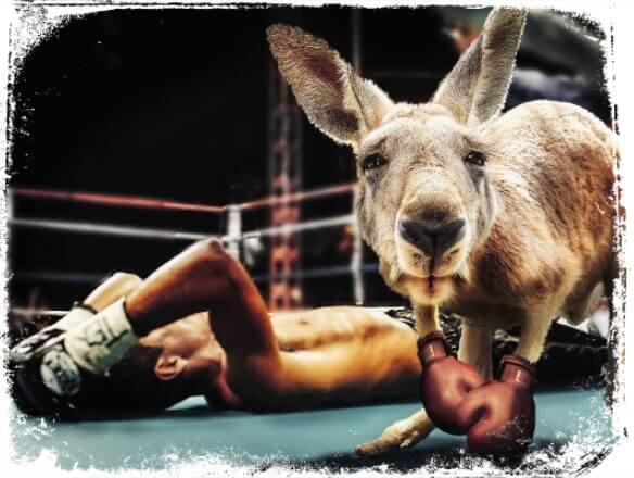 Sonhar com um canguru dando um chute ou chutando