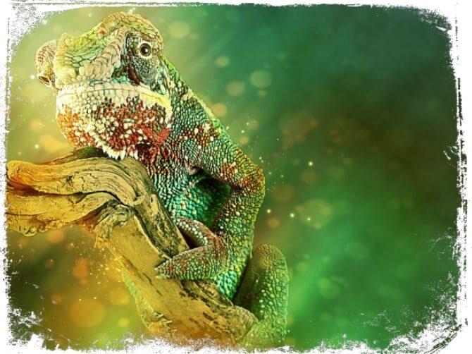 o que significa sonhar com camaleão