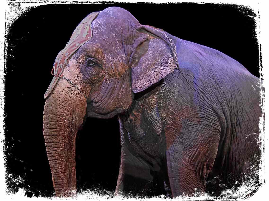 Sonhar com circo de animais selvagens