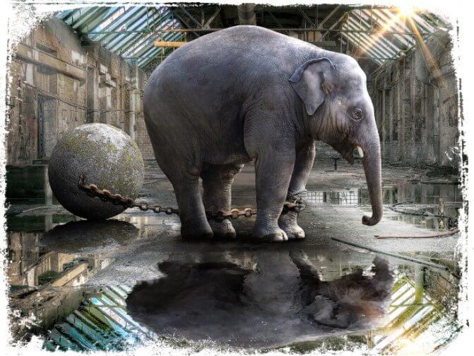 Sonhar que vê um animal preso por correntes