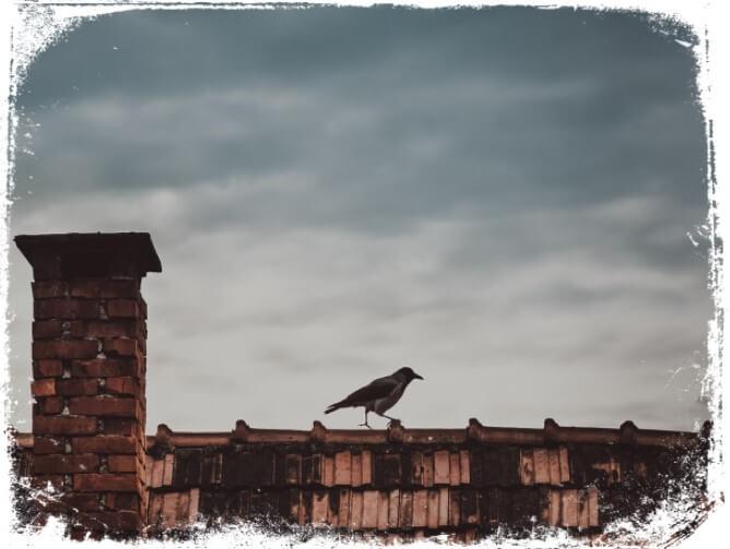 Sonhar com corvos em casa