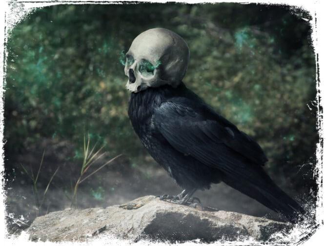 Sonhar com corvo morto