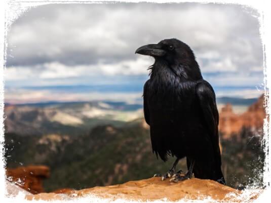 O Corvo é um anima espiritual associado aos mistérios da vida e à mágica