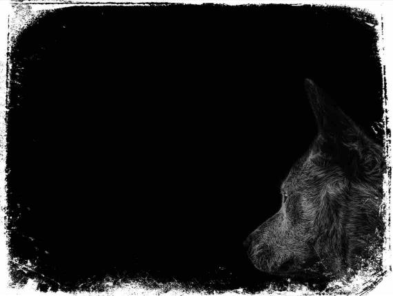 escuridão e cães sonho