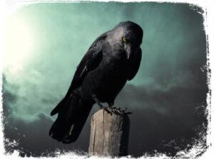 Qual é o significado de sonhar com corvo?