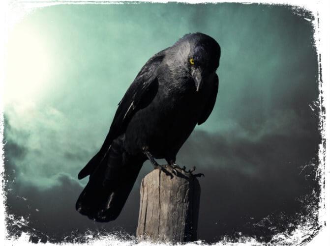 Sonhar com corvo preto