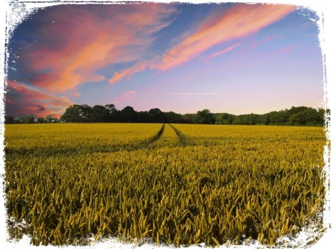 sonhar com terreno verde