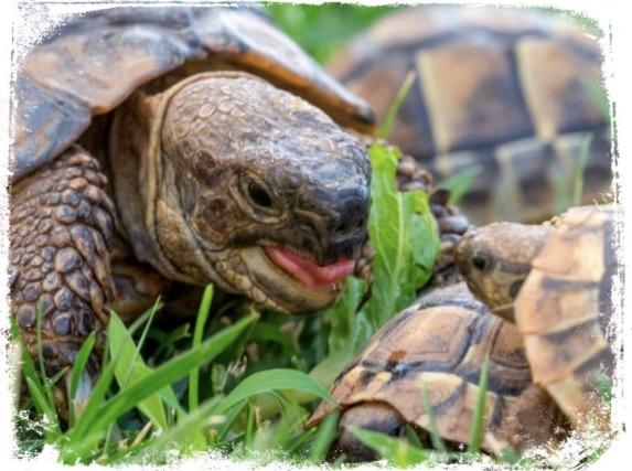 O que significado tartaruga em sonho