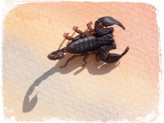O que significa escorpião pequeno em sonho