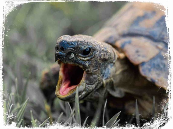 Significado de tartaruga hostil em sonho