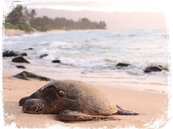 Significado de sonhar com tartaruga morta