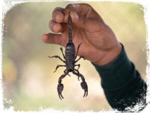 significado de sonhar com escorpiao