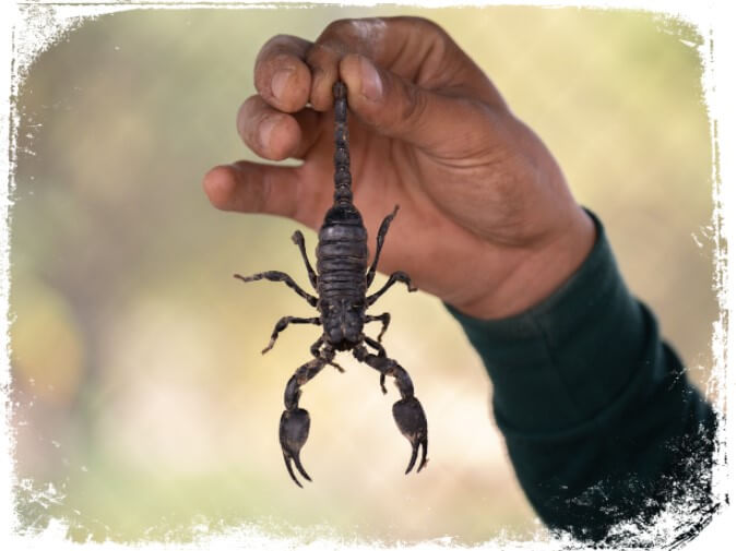 Sonhar que tem medo de escorpião
