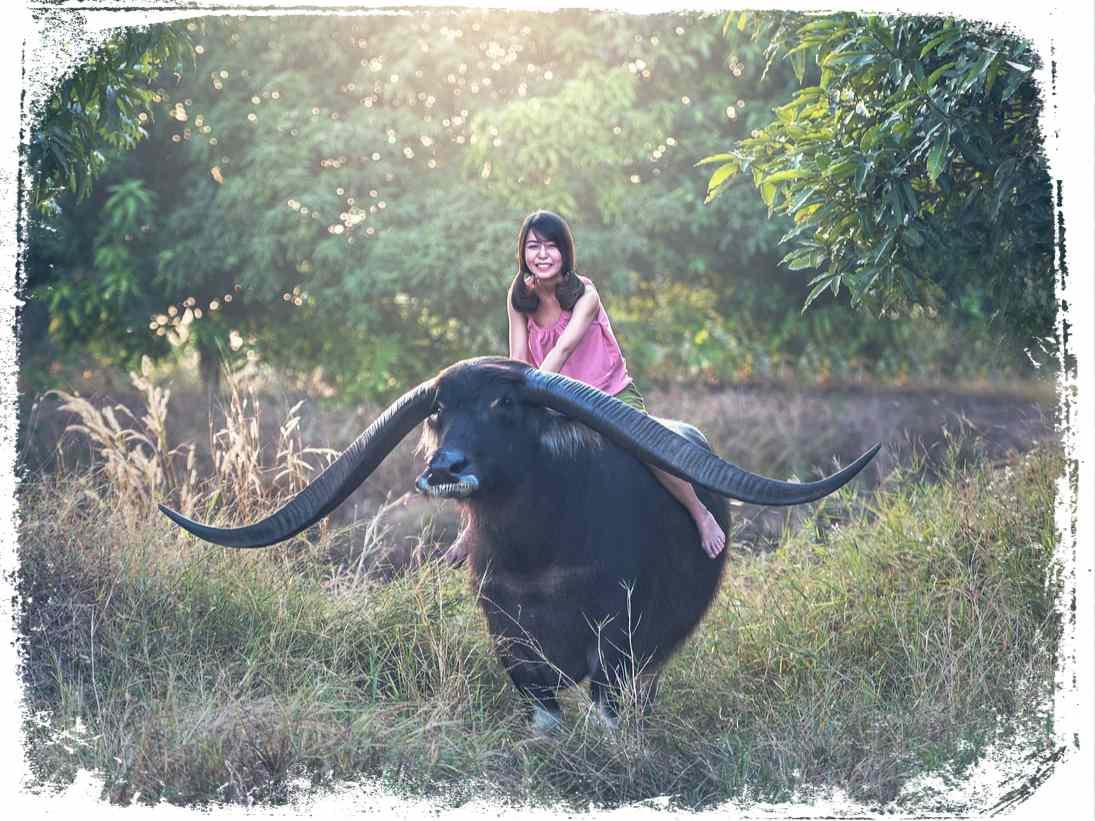 Montar em búfalo em sonho