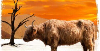 O que significa sonhar com búfalo
